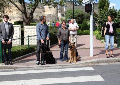 chien guide sur un passage pieton