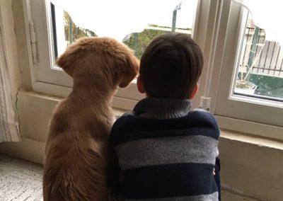 enfant et son chien en formation