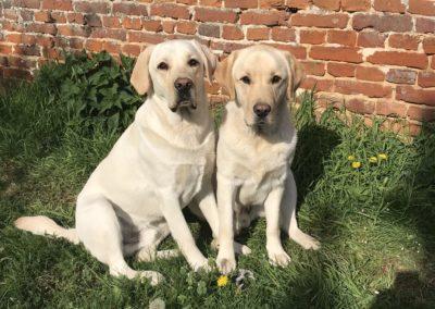 Les chiens pendant le confinement – Nao et Nolo